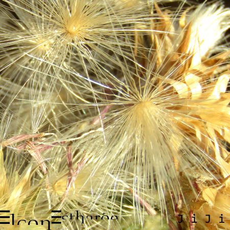 elconEstharoe - JiJi - Jynnji Records